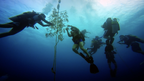 The Force Blue team works to repair and rebuild coral in the Cayman Islands in May, 2017. (Working Pictures)