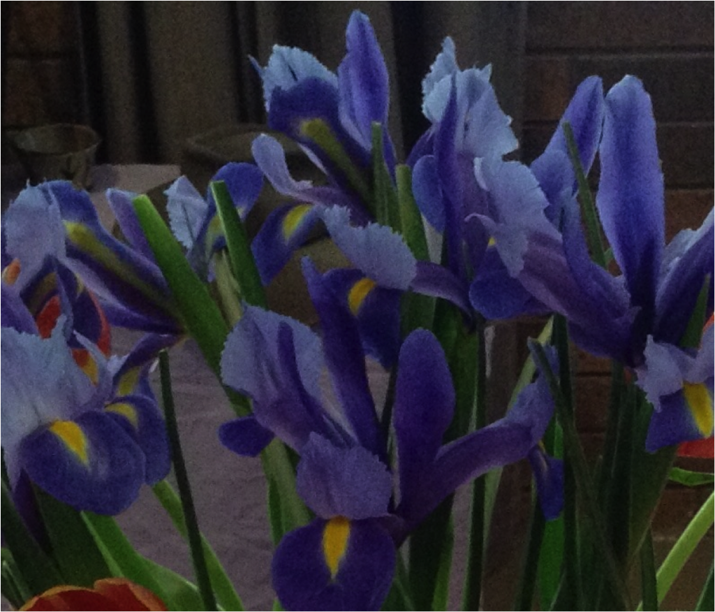 Enjoy The Beauty Of The Flowering Iris Codec Prime A New