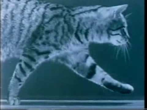 Project Acoustic Kitty: the CIA and There Cat Spy
