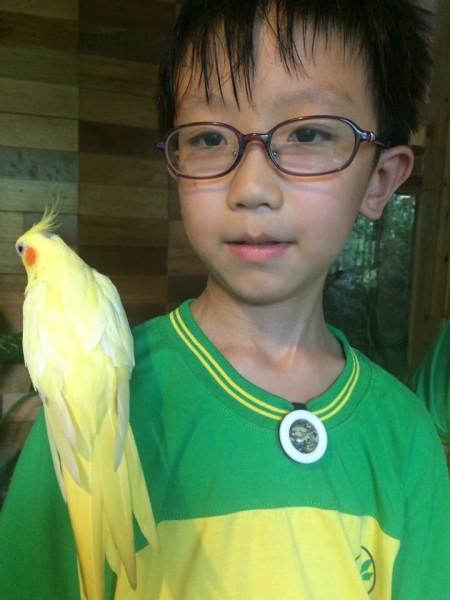 A cute cockatiel named Meimei in Fangyu Farm is popular with kids. (Image: Courtesy of Fangyu Farm)