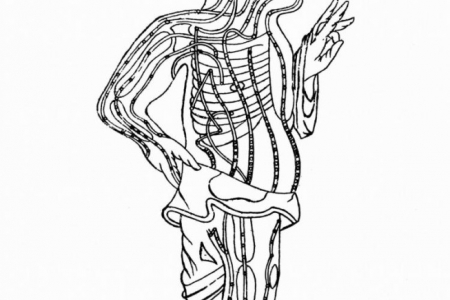 A drawing of organ meridian energy flows. As with organs, each organ flow becomes more active at a specific time of the day. (Image: Photos.com)